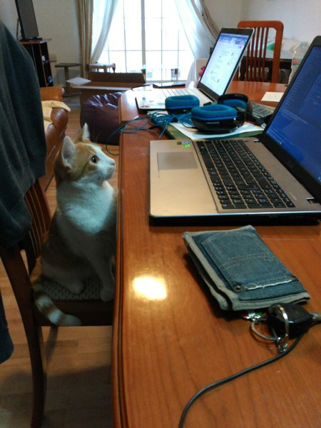 gato ordenador game jam